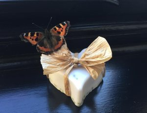 lavendar-soap-butterfly-web